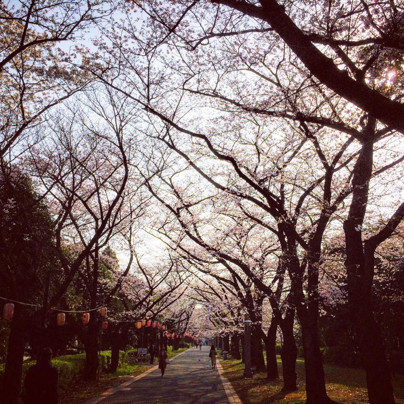 辰巳緑道公園
